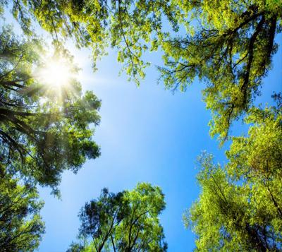 Gökyüzü - Ağaç